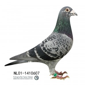 NL01-1410607