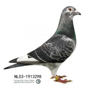 NL03-1913298