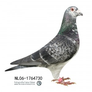 NL06-1764730