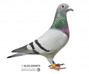 NL09-2055975