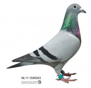 NL11-1549343