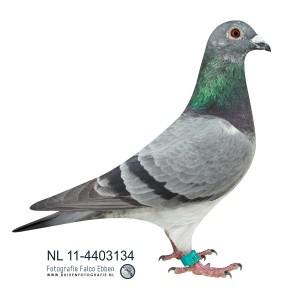 NL11-4403134