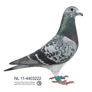 NL11-4403222
