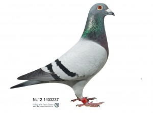 NL12-1433237