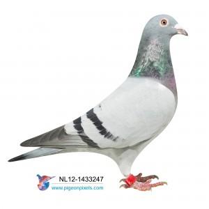 NL12-1433247