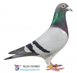 NL03-1916661