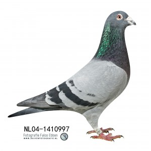 NL04-1410997