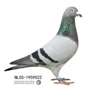 NL05-1959022