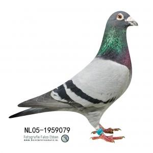 NL05-1959079