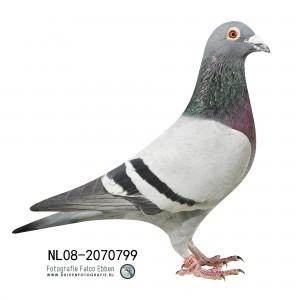 NL08-2070799