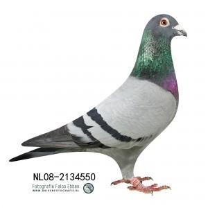 NL08-2134550