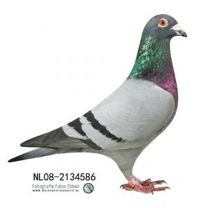 NL08-2134586